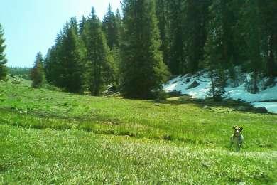 Maple Grove Rec Site Campground