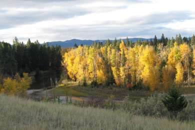 Moose Creek Campground