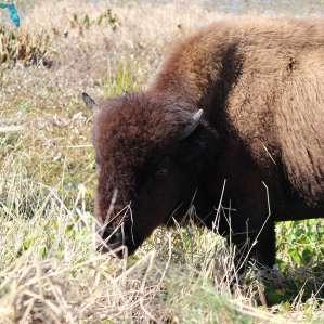 Paynes Prairie Preserve