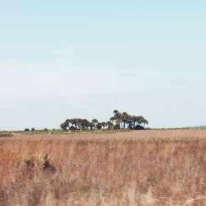 Kissimmee Prairie Preserve