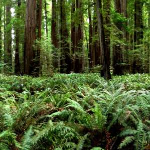 Del Norte Coast Redwoods