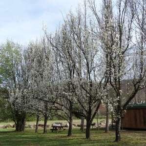 Crawford's Camp