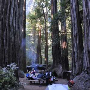 Big Basin Redwoods
