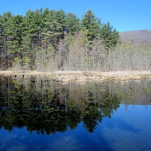 Lake Shaftsbury State Park