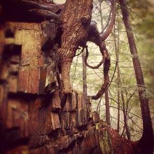 Fort Dummer State Park