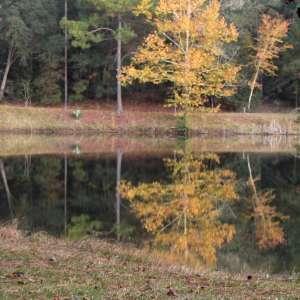 Laura S. Walker State Park