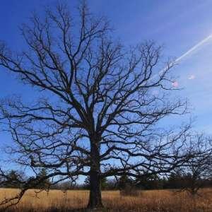 Pershing State Park