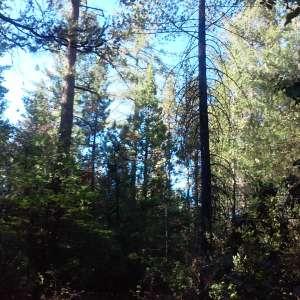 Wilderness Mariposa