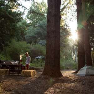 Earthy Redwood Retreat