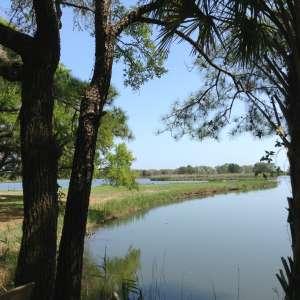 Rice Plantation & Live Oak