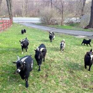 New Hampton Healing Farm