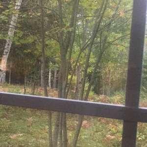 Jen's Maine Woodland Getaway