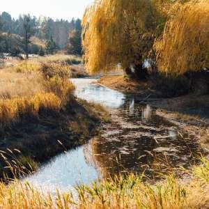 Buckman Duck Ranch