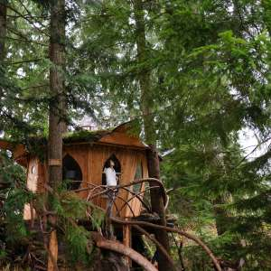 Tracy Rice's  3 Tree Houses