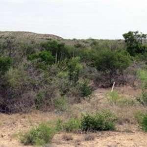 Dee W.'s Land