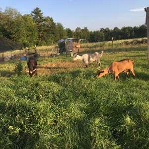 Howling Goat Farm and Grange