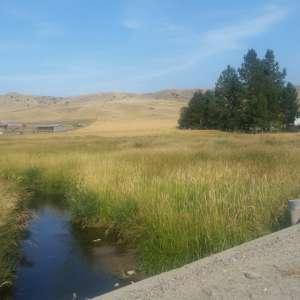 Camp Creek Meadow