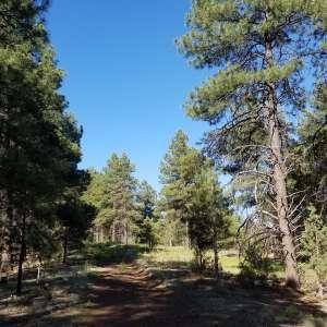 Parks Ponderosa Forest