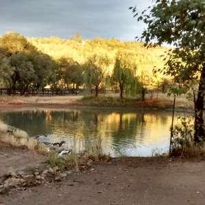 Wild Goose Camp