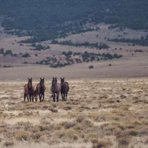 Martin Ranch