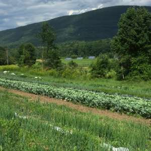 Organic Veggie and Flower farm