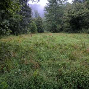 250 Acres Remote Forest