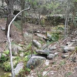 Creek of Solitude