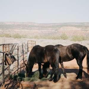 Coral Pink Ranch Cowboy Camp