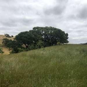 Ranch Tranquillo
