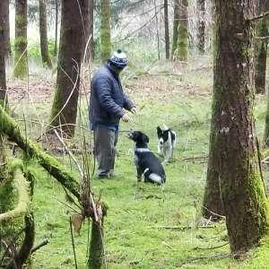 Z Outdoor Woods