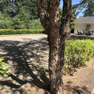 Private Wine Country Campsite