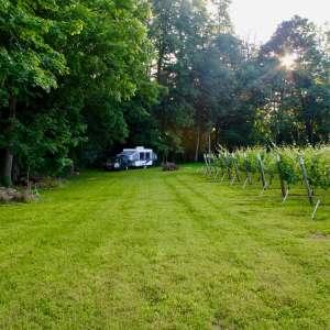 Mulln-Heim Vineyards