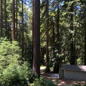 Magic Redwood Forest