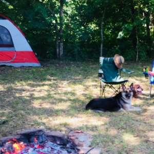 A Starry NIght Camp