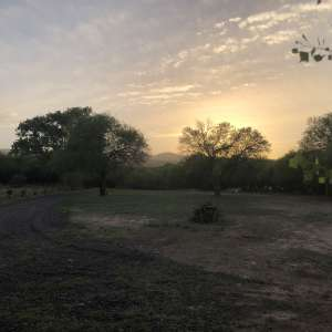 Richard's Mesquite Canopy