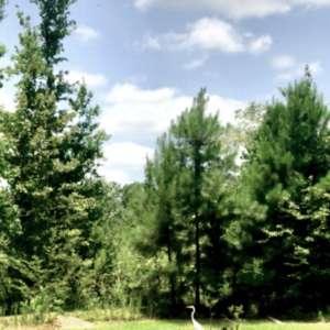 Willow Acres