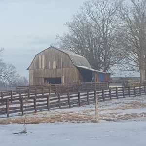 ROSEVIEW CATTLE FARM