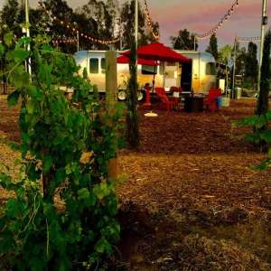 Glamping in the Vineyards