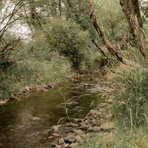 Dave & Dee's Creekside Camp