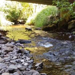Elk Creek Runs Through It
