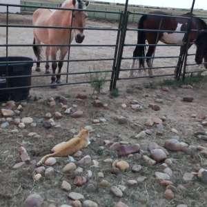 Ranch 185 HORSE HOTEL