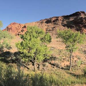 Dreaming Creek Canyon