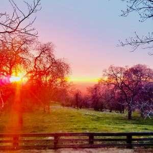 Ranch in the Oaks