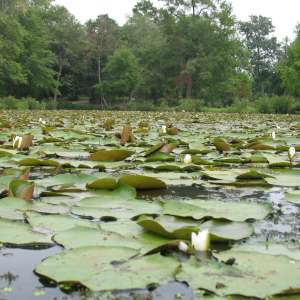 Kenilworth Park & Aquatic Gardens