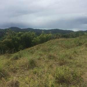 Hacienda Liberación Forest