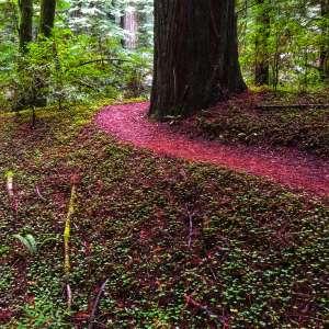 Redwood TinyTrailer Camping