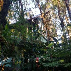 Treehouse Cannabis Farm