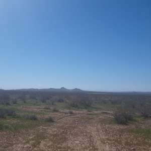 Pinwheel acres