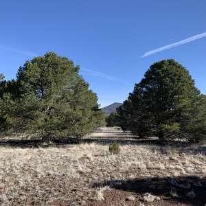 Grand Canyon Eco-Glamping