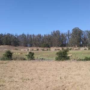 Monkeyflower Ranch
